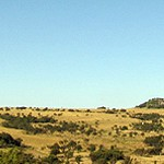 South Africa, Gauteng Province, Laezonia
