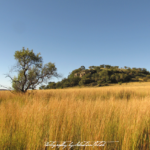 South Africa Highveld Laezonia | travel photography by Sebastian Motsch (2012)