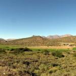 South Africa, Klein Karoo, Ostrich Farm