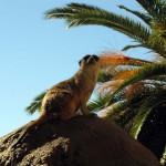 Cango Wildlife Park, Oudtshoorn, South Africa