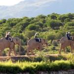 Buffelspoort Lodge Oudtshoorn South Africa