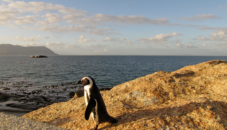 Capetown Penguin South Africa | photography by Sebastian Motsch (2012)