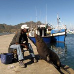 South Africa, Cape Town, Hout Bay, Tame Seal