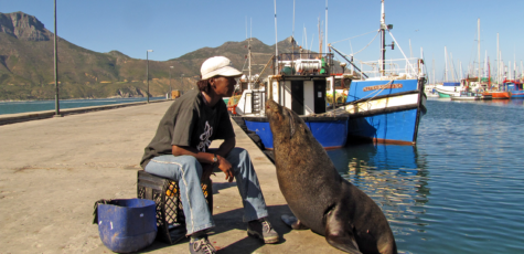 Tame harbor seal Hout Bay South Africa | photography by Sebastian Motsch (2012)