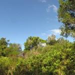 South Africa, Capetown, Kirstenbosch, Botanical Garden, Table Mountain