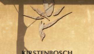 Kirstenbosch Botanical Gardens South Africa   photography by Sebastian Motsch (2012)