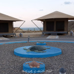 Oman Ras al Jinz Turtle Reserve EcoLodge | Travel Photography by Sebastian Motsch (2014)
