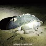 Ras-al-Jinz Turtle Reserve Oman   Travel Photography by Sebastian Motsch (2014)