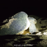 Ras-al-Jinz Turtle Reserve Oman | Travel Photography by Sebastian Motsch (2014)