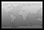 Flag World greyscale