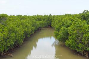 Japan Miyako-jima Shimajiri Mangroves | Travel Photography by Sebastian Motsch (2017)