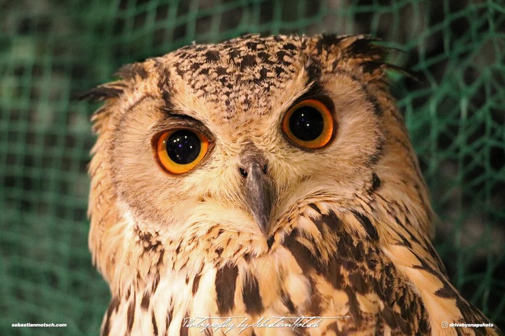 Owl Eyes II by Sebastian Motsch
