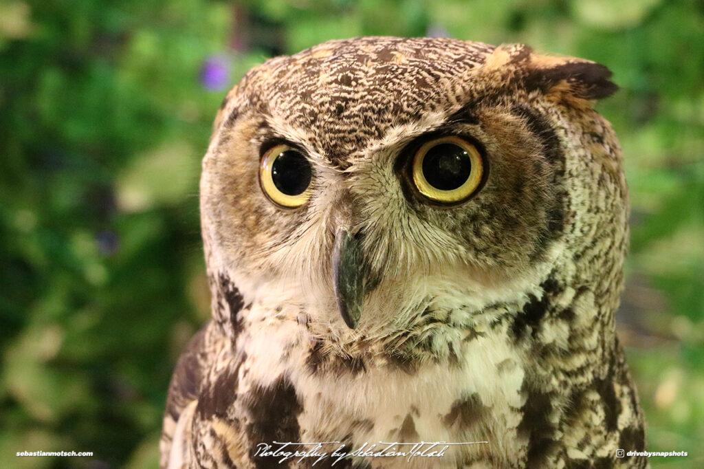 Owl Eyes by Sebastian Motsch