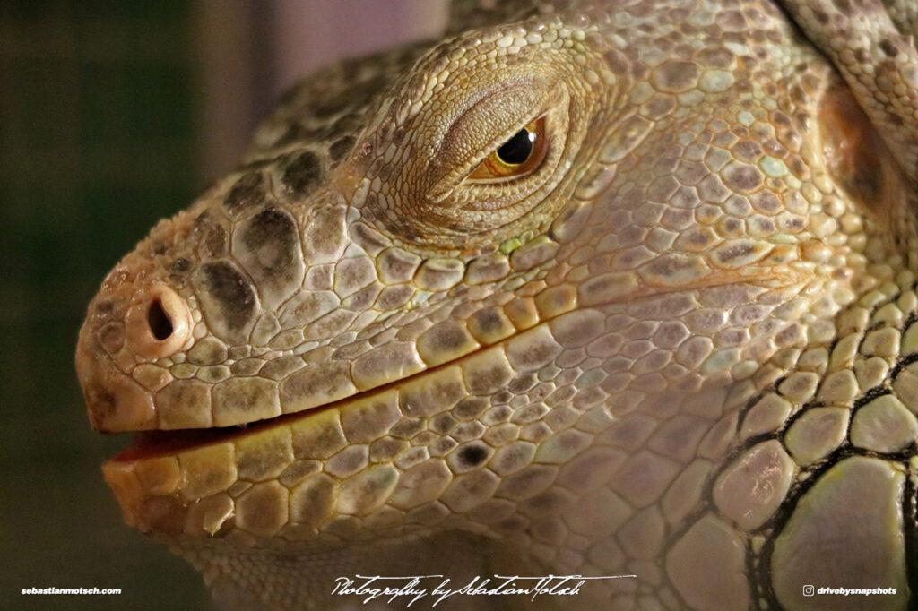 Reptile Eye by Sebastian Motsch